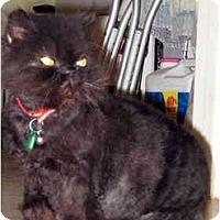 Adopt A Pet :: Smooshie URGENT - Sacramento, CA