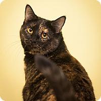 Adopt A Pet :: Tulip - Circleville, OH