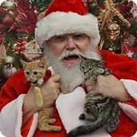 Adopt A Pet :: Georgie - Washington, VA