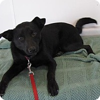 Terrier (Unknown Type, Medium) Mix Dog for adoption in St. Petersburg, Florida - Onyx