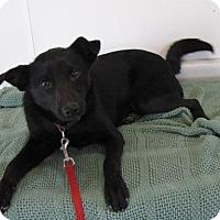 Adopt A Pet :: Onyx - St. Petersburg, FL