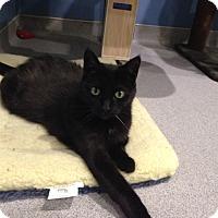 Adopt A Pet :: Cee Cee - Oyster Bay, NY