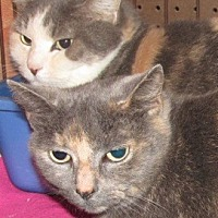 Adopt A Pet :: Hannah & Harley - Germantown, MD
