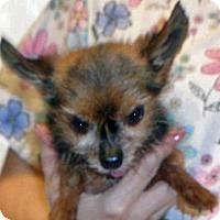Adopt A Pet :: 336564 - Wildomar, CA