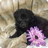 Adopt A Pet :: Sora - Davis, CA
