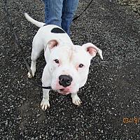 Adopt A Pet :: Clyde - Tillamook, OR