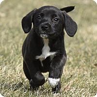 Adopt A Pet :: Leila - Mechanicsburg, PA