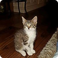 Adopt A Pet :: Sonny - Island Park, NY