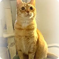 Adopt A Pet :: Nibbler - Nottingham, MD