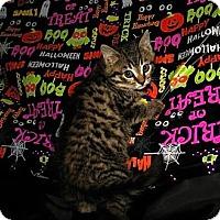 Adopt A Pet :: Cal - Norwich, NY