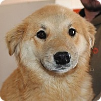 Adopt A Pet :: Creme Brulee - Kittery, ME