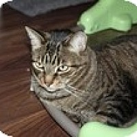Adopt A Pet :: George - Vancouver, BC