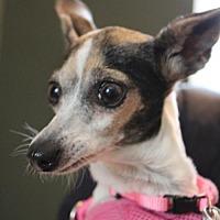 Adopt A Pet :: Ada - Richardson, TX