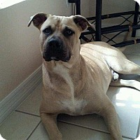 Adopt A Pet :: Jake - hollywood, FL