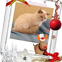 Adopt A Pet :: Petunia - Harrisburg, NC
