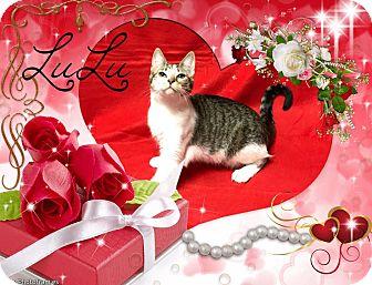 Domestic Shorthair Cat for adoption in Davison, Michigan - Lulu