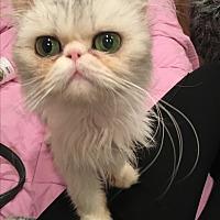 Adopt A Pet :: Michelle - Beverly Hills, CA