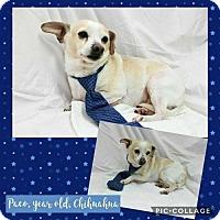 Adopt A Pet :: Paco - Ponca City, OK