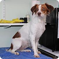 Adopt A Pet :: TN/Moxie - Marietta, GA