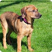 Adopt A Pet :: PUPPY PRINCESS PICKLES - Norfolk, VA
