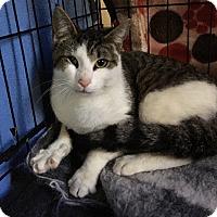 Adopt A Pet :: Murphy - Plainville, CT