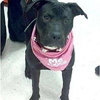 Adopt A Pet :: Zoe - Costa Mesa, CA