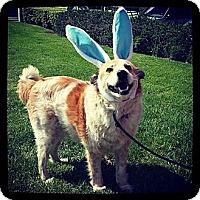 Adopt A Pet :: Bob - Mission Viejo, CA