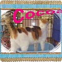 Adopt A Pet :: Cocoa - Jacksonville, FL