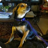 Adopt A Pet :: Stella - McLoud, OK