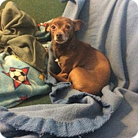 Adopt A Pet :: CoCo- Chicago - Dayton, OH