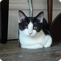 Adopt A Pet :: Buella - St. Louis, MO