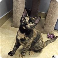 Adopt A Pet :: La Panza - Deerfield Beach, FL