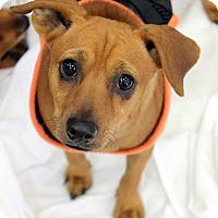 Adopt A Pet :: Karen - Ft. Lauderdale, FL