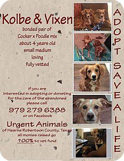 Cocker Spaniel/Poodle (Miniature) Mix Dog for adoption in Hearne, Texas - Kobe and Vixen