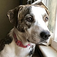 Adopt A Pet :: Beba - Detroit, MI