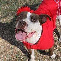 Adopt A Pet :: Jersey - Columbus, MS