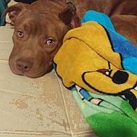 Adopt A Pet :: Tyson - Jasper, GA