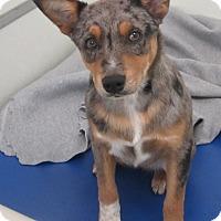 Adopt A Pet :: Belle - Holton, KS