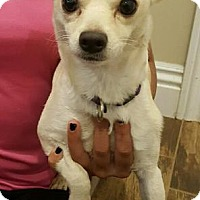 Adopt A Pet :: GRACEY - Modesto, CA