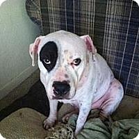 Adopt A Pet :: Chloe - Gainesville, FL