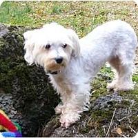 Adopt A Pet :: Sydney - Mocksville, NC