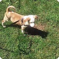 Adopt A Pet :: Gigit - Lakeville, MN
