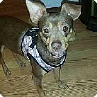 Miniature Pinscher Mix Dog for adoption in McDonough, Georgia - Missy