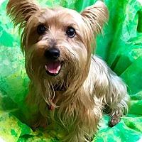 Adopt A Pet :: Ralphie - Cleveland, OH