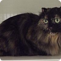 Adopt A Pet :: SOLSTICE - Cheboygan, MI