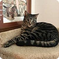 Adopt A Pet :: ROSCOE - Brea, CA