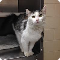Adopt A Pet :: T-9 Karma - Triadelphia, WV
