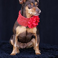 Adopt A Pet :: Rhoda - SAN PEDRO, CA