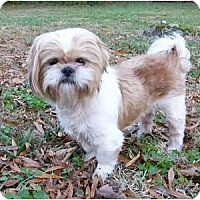 Adopt A Pet :: Tucker - Mocksville, NC
