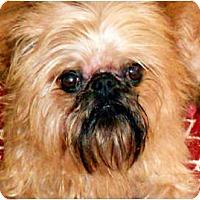 Adopt A Pet :: OPIE - ADOPTION PENDING - Little Rock, AR